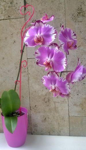 Аксессуары для орхидей