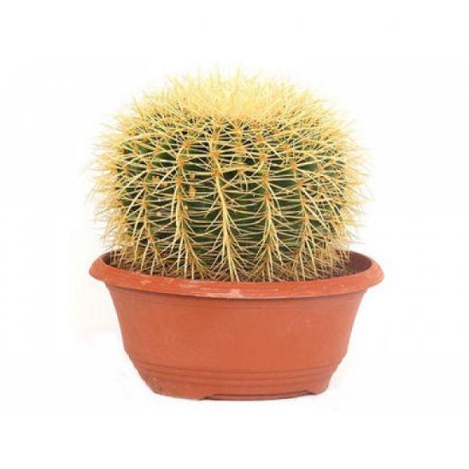 Горшки и кашпо для кактусов