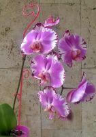 """Держатель для орхидей """"Яблоко"""" h 60см"""